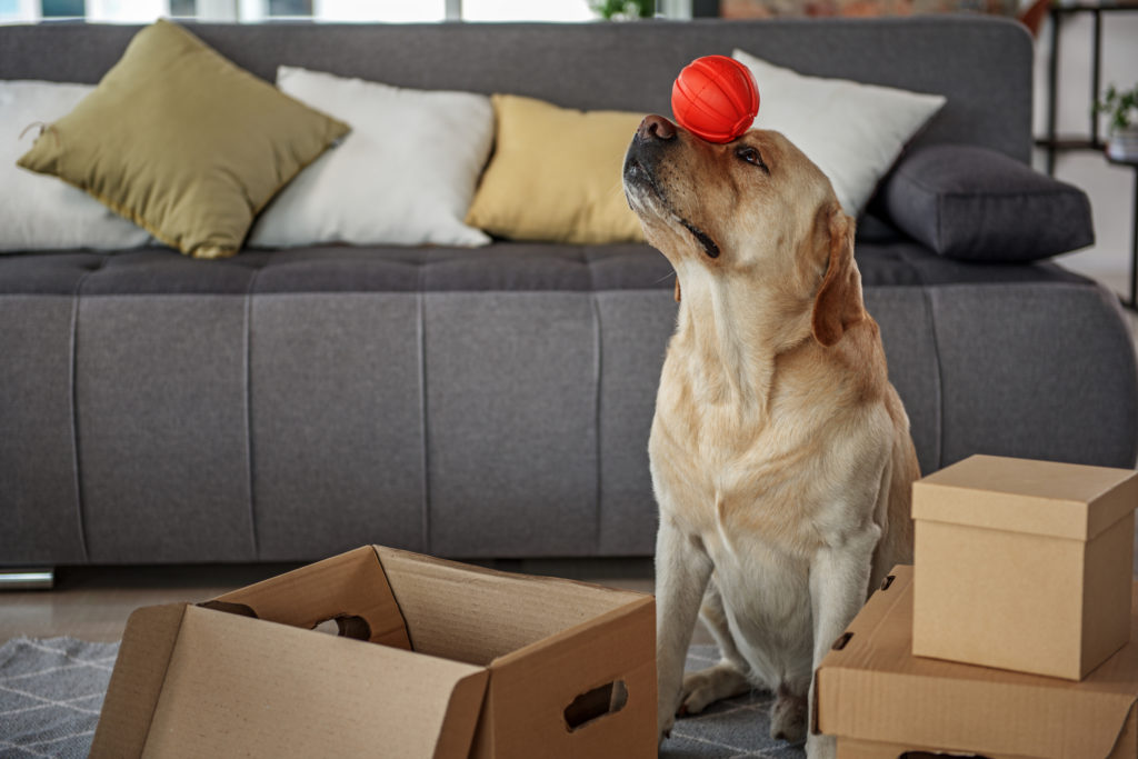 Dog balancing a ball on its head surrounded by packages